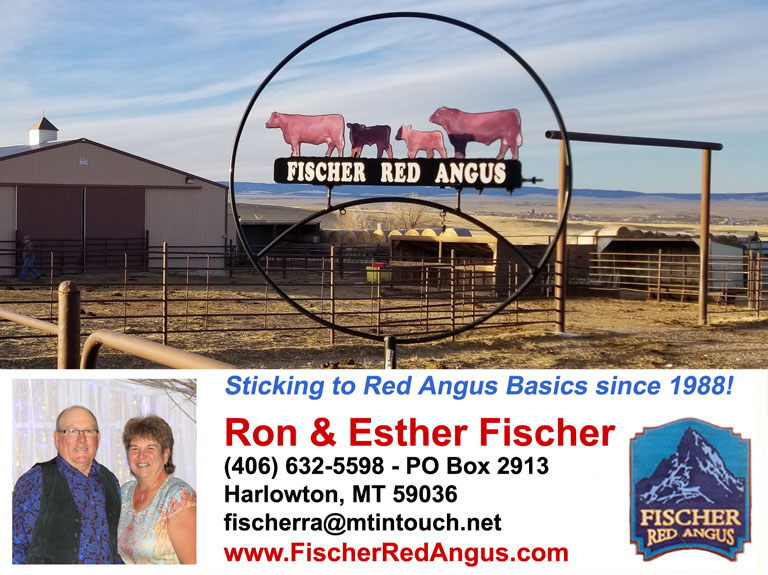 Fischer Red Angus Harlowton Montana Contact Info